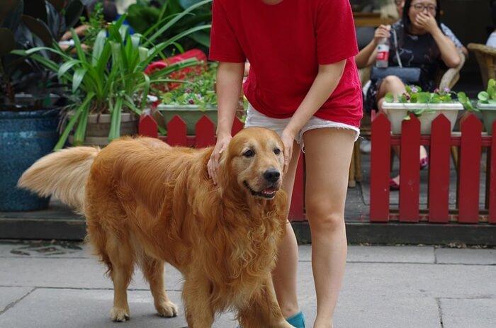【長生き】大型犬の健康維持サプリメントランキング!悩み別おすすめ9選
