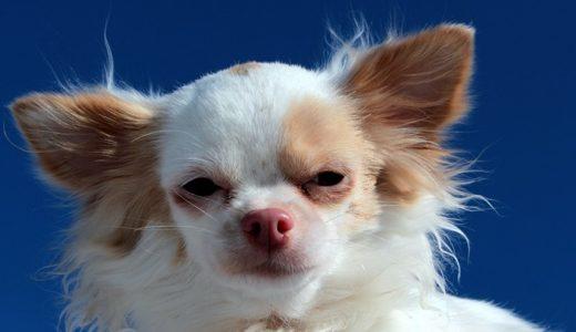 【長生き】小型犬の健康維持サプリメントランキング!悩み別おすすめ9選