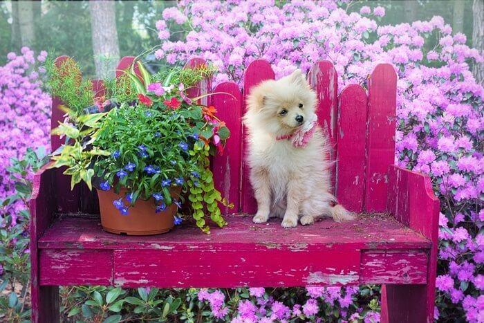 小型犬のドッグフード人気ランキング!評判が良いおすすめの餌の選び方