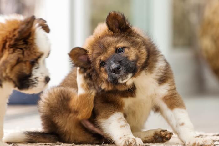 犬の抜け毛におすすめのドッグフードランキング!抜け毛の原因と対策を徹底解説
