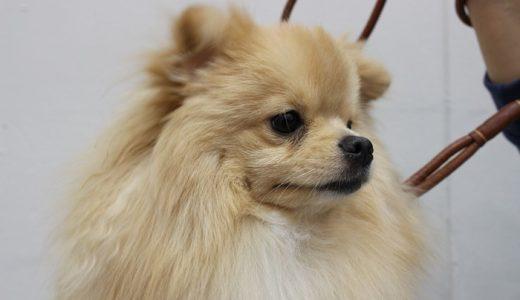 犬の毛艶・毛並みを良くするドッグフードおすすめランキング!ツヤツヤにする食べ物