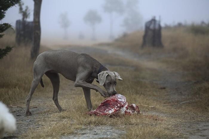 高タンパク質のドッグフードおすすめランキング!犬に高タンパク質がいい理由とは?
