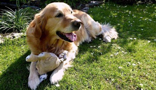 ヒューマングレードドッグフードおすすめ人気ランキング!安心安全な犬の餌の選び方