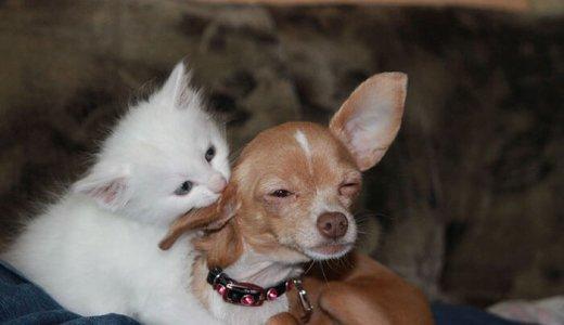 犬のきつい体臭の原因って?愛犬の気になるニオイ予防と対策