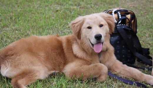 犬のアレルギーサプリメントおすすめランキング!実際に効果はあるの?
