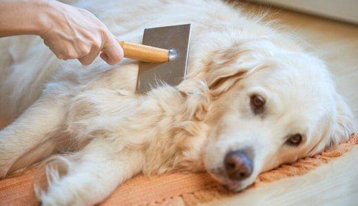 犬の毛が抜ける時期は春と秋!抜け毛の原因と換毛期対策