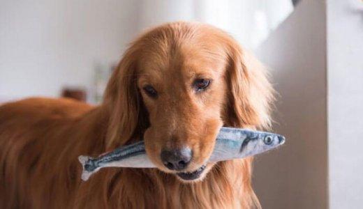 無添加の魚系ドッグフードランキング!肉アレルギーの犬におすすめ