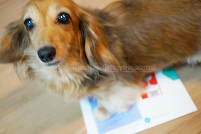 ペットの遺伝子検査キット口コミレビュー!愛犬がなりやすい病気を調べてみた2