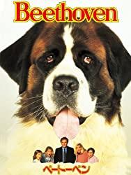犬のコメディ映画ベートーベンの動画のフル視聴方法とあらすじと感想!無料で動画配信をみる方法