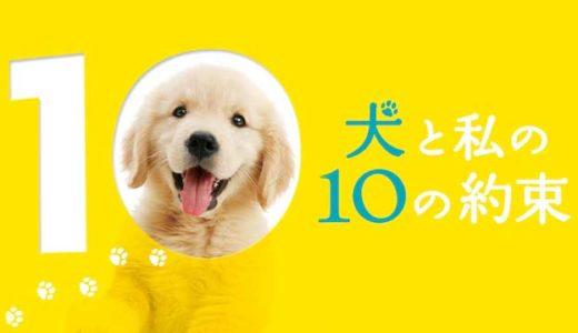 犬の感動映画『犬と私の10の約束』の動画のフル視聴方法とあらすじと感想!無料で動画配信をみる方法