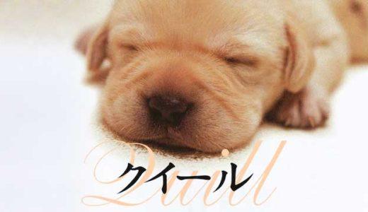 犬の感動映画『クイール』の動画のフル視聴方法とあらすじと感想!無料で動画配信をみる方法