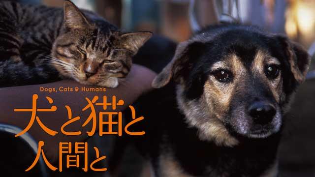 犬の感動映画『犬と猫と人間と』の動画のフル視聴方法とあらすじと感想!無料で動画配信をみる方法