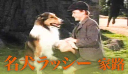 犬の感動映画『名犬ラッシー』の動画のフル視聴方法とあらすじと感想!無料で動画配信をみる方法