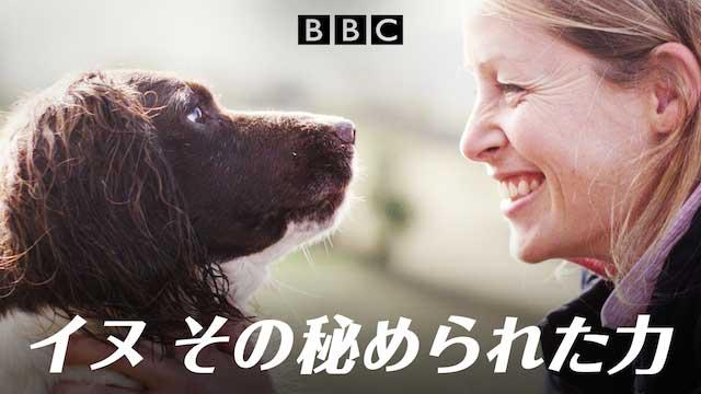 犬の感動映画『イヌ その秘められた力』の動画のフル視聴方法とあらすじと感想!無料で動画配信をみる方法
