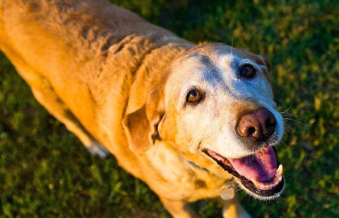 老犬になったら気をつけたいこととは?今からできるシニア犬の老化対策
