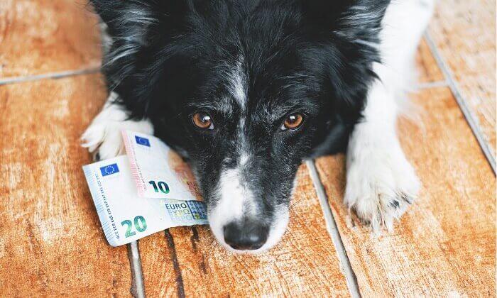 犬を飼うのにいくら必要?1日、月、年間、生涯にかかる費用を計算してみた